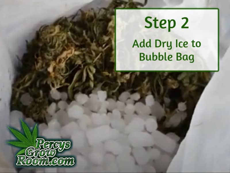 adding dry ice and cannabis to bubble bag to make dry ive hash, percys grow room