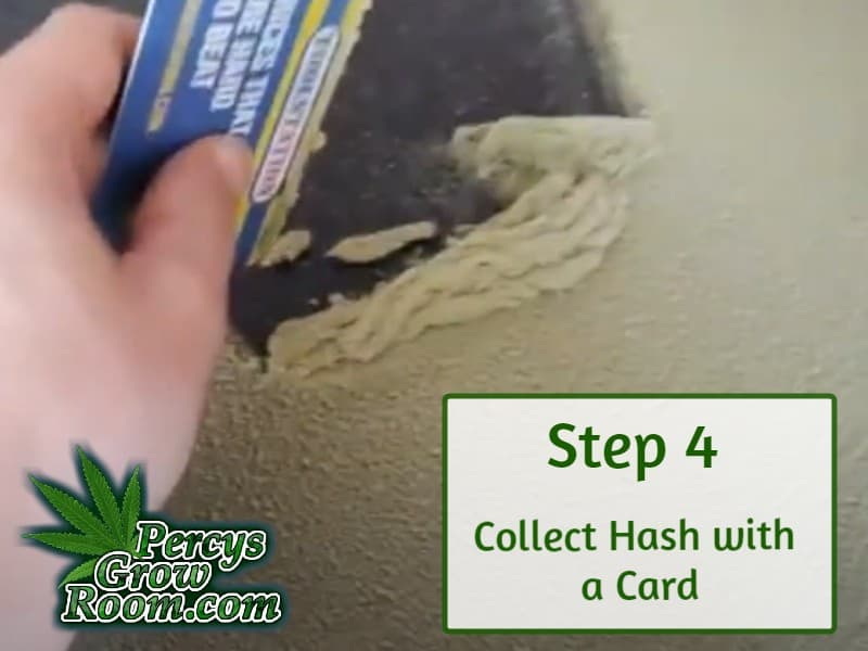 Pile of dry ice hash scrapped up with a card, making dry ice hash, percys grow room,