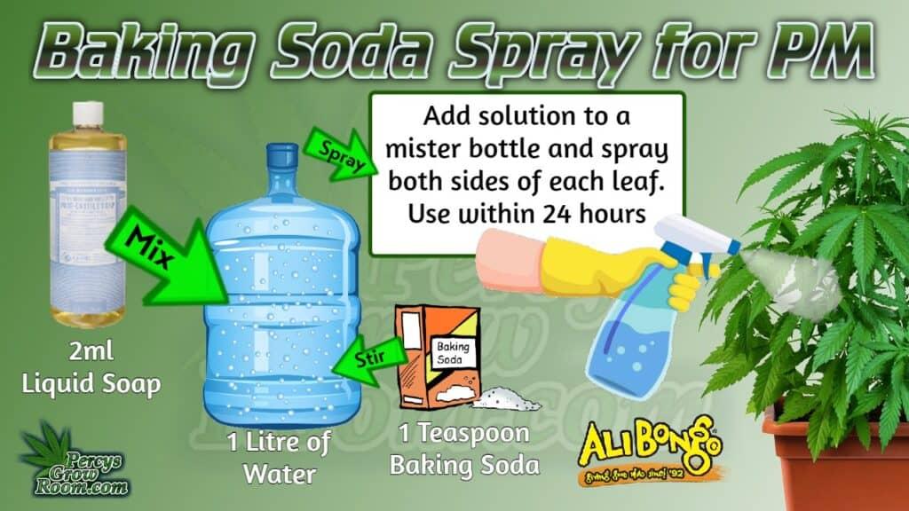 baking soda spray for powdery mildew, percys grow room, learn how to grow weed,