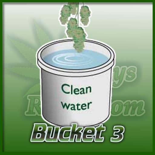 bucket 3 clean water, rinsing dirt off buds, cannabis growing forum ,