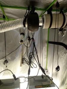 inside flower tent (3)