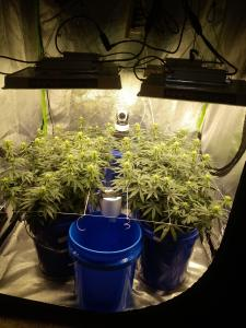 inside flower tent (1)
