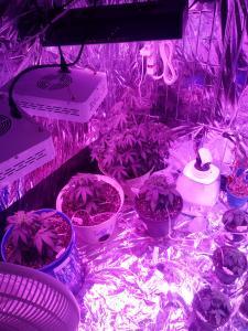 inside veg tent (4)