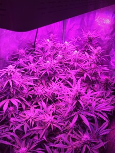 Day 53ish   2x4 with autos2