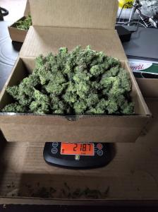 AK2 Wet Harvest Weight
