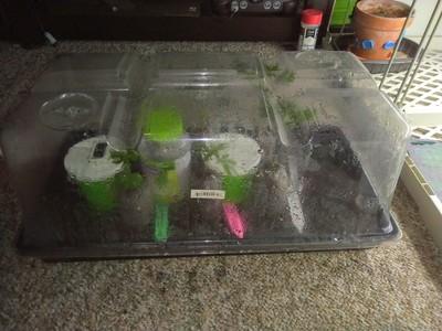 Clone tray closed (Day 2)