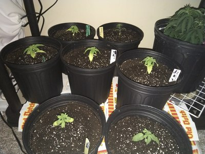 Day 17   After transplant