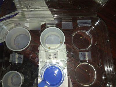 Mar 26   Beans in water