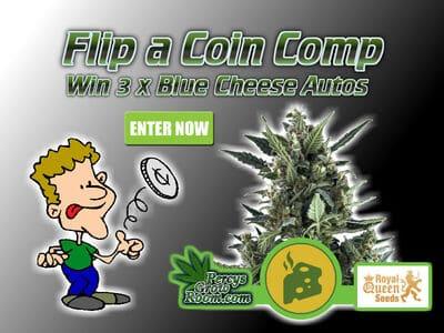 flip a coin comp