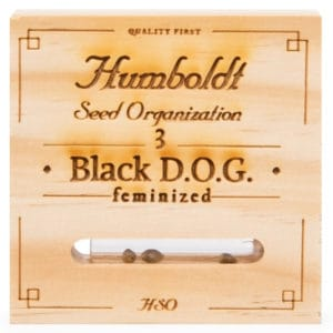 0711900 Black DOG Feminized Humboldt 300x300