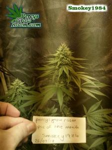 Cannabis Growers Forum POTM Smokey