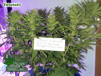 Cannabis Growers Forum POTM Twisted