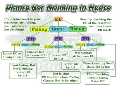 Cannabis Plants not drinking in hydroponics