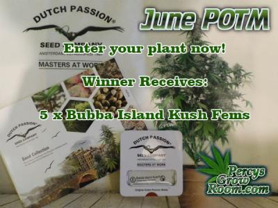 June Plant of the month FI