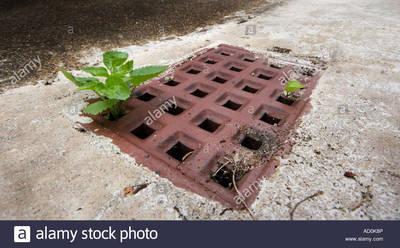 water drain grate with weed growing from it AD0K8P