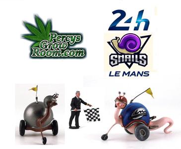 snail race 2