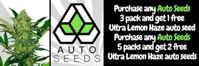 Auto Seeds Banner June20