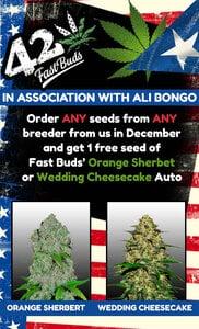 Fast Buds Info Dec20