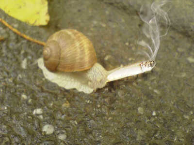 smoking snail